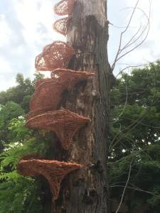 vivian-visser-ledge-fungus-green-briar-pk