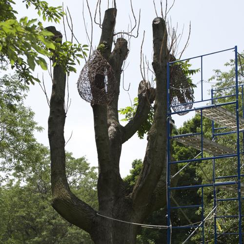 VV's Tree_500x500
